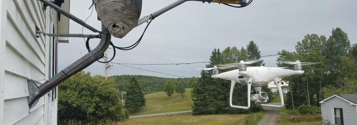 DJI Phantom 4 Pro en vuelo atacando un nido de avispa de cara calva.