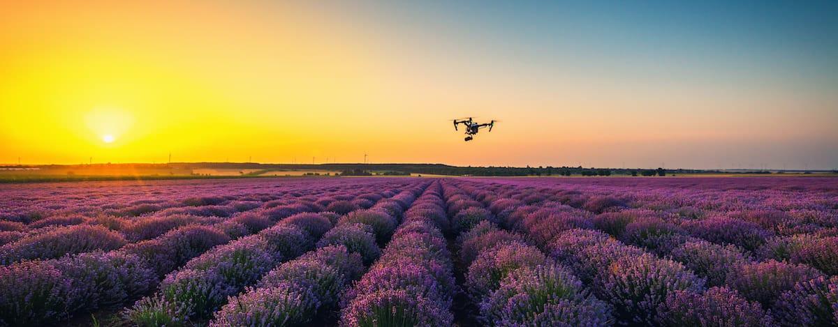 dron dji inspire volando sobre campo de lavanda al atardecer con el sol de fondo